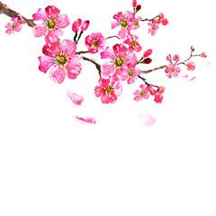 sakura tree; watercolor, cherry bloom