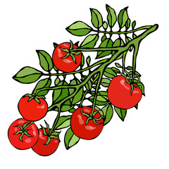 Bunch of Cherry Tomatoes on a Branch With Leaves. Botanical Gardening Illustration. Ketchup Logo or Vegetable Salad. Realistic Hand Drawn Vector Illustration. Savoyar Doodle Style.