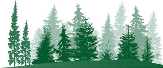fir trees green forest isolated on white