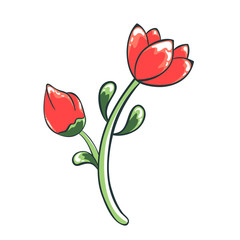Vector color illustration of flower. Red tulip drawing of a plant. Isolated object of floral theme