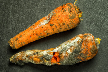 two moldy bad carrots on a textured black stone background