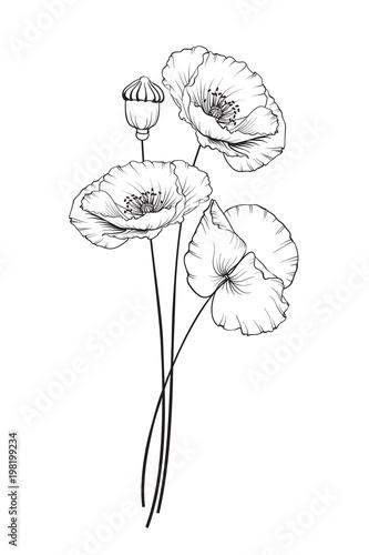Flat Single Poppy On White Background Summer Or Spring Illustration