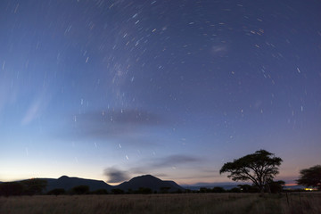 Star trails and acacia tree