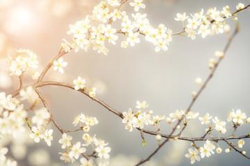 detail of cherry flower