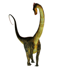 Barosaurus Dinosaur on White - Barosaurus was a herbivorous sauropod dinosaur that lived in Utah and South Dakota, USA in the Jurassic Period.