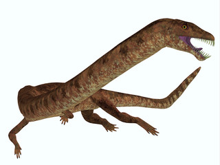 Tanystropheus Dinosaur on White - Tanystropheus was a marine predatory reptile that lived in the Triassic Seas of Europe and the Middle East.