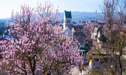 Frühling in MIttelwihr