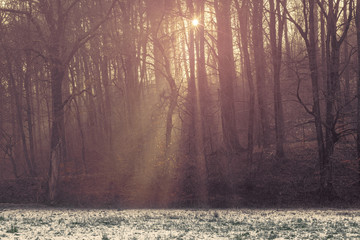 Sunlight shining through the trees in a forest