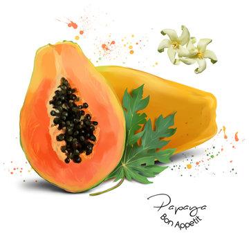 Papaya watercolor painting