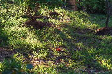 Grass shining under sun lights