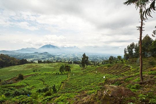 Landscape view in Virunga reserve, Rwanda