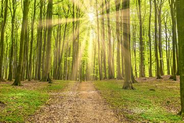 Wanderweg im sonnigen Laubwald