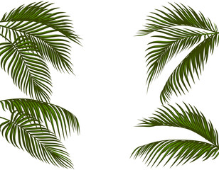 Fotobehang Palm boom Different in form tropical dark green palm leaves. Isolated on white background without a mesh and gradient. illustration
