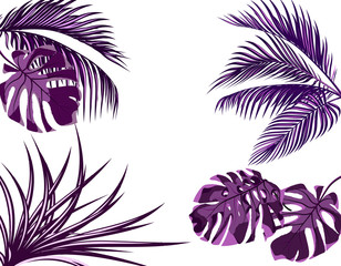 Ultra purple leaves of tropical palm trees. set. Monster, agave. Isolated on white background. illustration