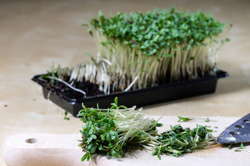 Cress sprouts on the kitchen table. Herbs cut on a wooden board in the kitchen before Easter.
