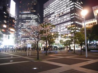 都市部の夜桜