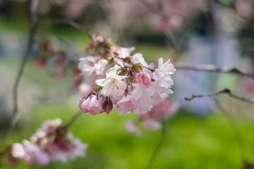 Fiore primaverile