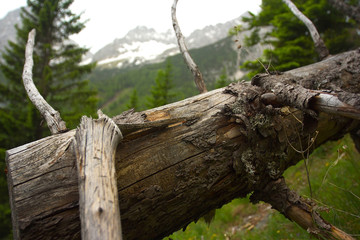 Detail of old spruce trunk with mountains on background