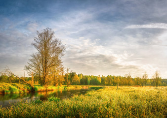 Spring bright landscape of meadow and scenery shore of river with trees and green grass. Rural natural scene. Nature background. Warm sunlight on grass on meadow. Forest shining on horizon from sun.