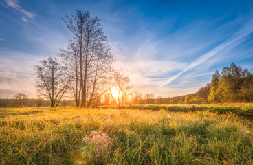 Natural scenery landscape on meadow on bright sunrise on spring morning. Spring grass, trees and blue sky over horizon. Rural scene outdoor nature background. Summer field with vivid sun on dawn.