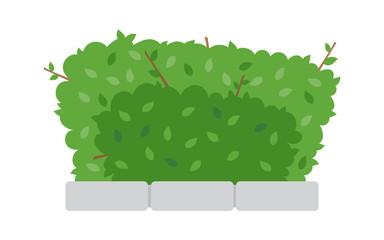 Green shrub fence on white background