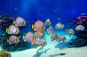 Fish in an aquarium on the red sea