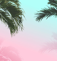 palm sweet pastel summer background