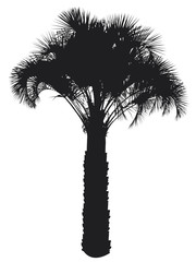 Tropical palm tree silhouette isolated on white background. Vector EPS 10