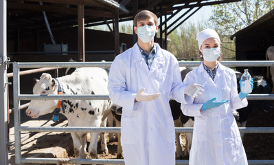 Troubled man and woman veterinarian standing close to cows