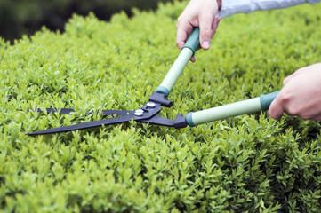 Cutting bush clippers