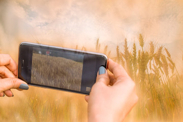 Hand is photographing a field of golden wheat with a smartphone.