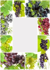 Wall Mural -  page de raisins