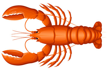 Vector illustration of a lobster, viewed from above.