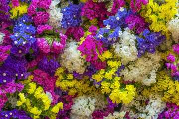 A bunch of colorful Statice or Caspia flower which full of meaningful botanical characteristics