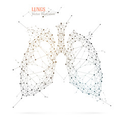 Abstract human lungs. Vector polygon medicine illustration.