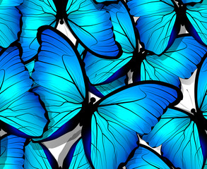 Seamless butterfly pattern wings on white