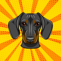 Dachshund face. Dog portrait muzzle head. Dog breed. Vector.