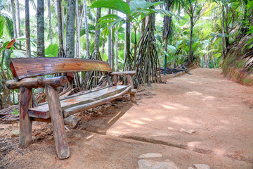 Wooden bench in tropical forest, Praslin Island, Seychelles