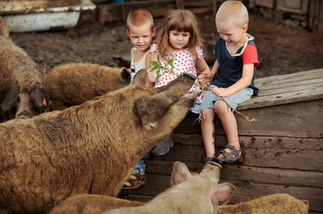 A girl from Italy came to visit Russian boys. One girl and two boys feed the pigs. The concept of friendship between peoples and love of animals.