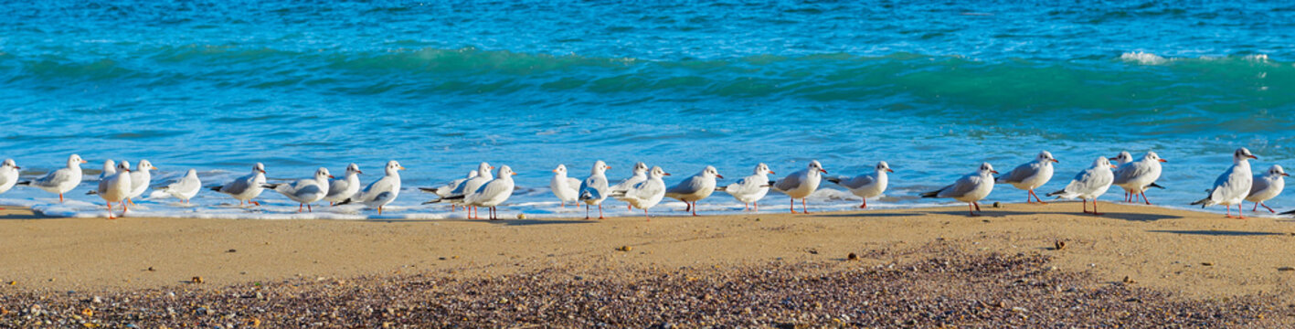 Many gull birds