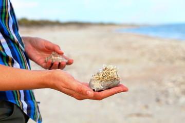 Close up of woman hand holding big beautiful rapana sea shell