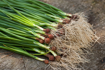 Green Onion. Fresh Green Onions With Roots On Wooden Board Top View.