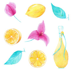 Watercolor handmade set of lemon, olive oil, leaf and bouganvillea flower. Can be used for printing and decoration.