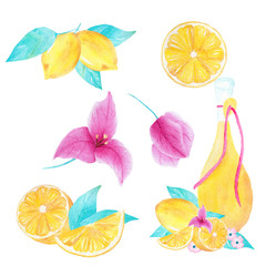 Watercolor hand painted collection of lemon, bouganvillea and olive oil.