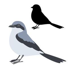 klapekster bird vector illustration flat style  silhouette