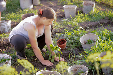 Young pregnant girl planted seedlings in ground in her garden. Spring sunny day. Tomatoes, peppers, aubergine