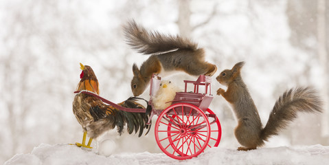 red squirrels on an wagon with an rooster in snow