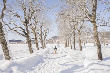 children walking between trees with snow