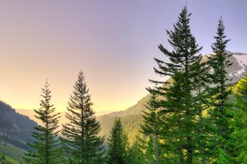 Panoramic view of Mount Rainier National Park, Washington State, USA
