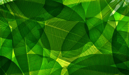 Double exposure of green leaves